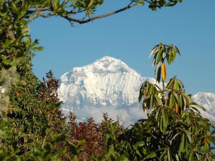 Dhaulagiri am Poon Hill Nepal/ Himalaya