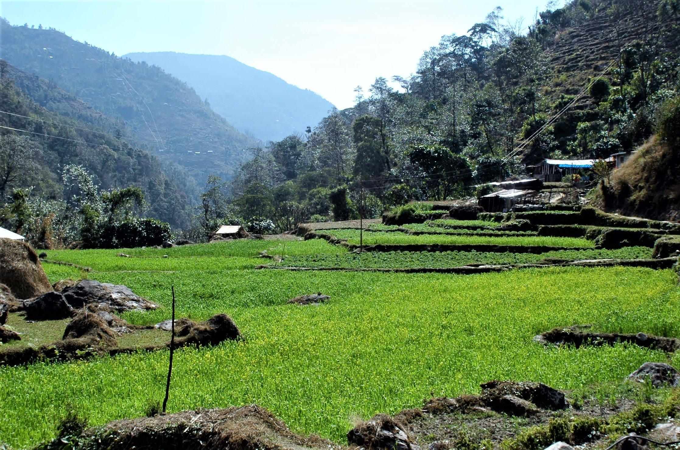 Annapurna-trekking-grüne-felder
