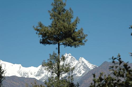 trekking-ins-langtang-goisakunda
