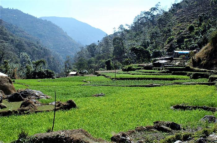 muktinath-treck-gruene-landschaften